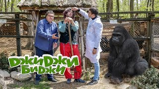 ДжиДжи БиДжи - Разгонената горила 🐵