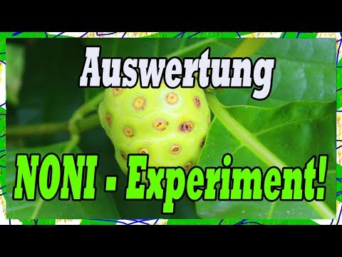 Noni Wirkung 🍈 30 Tage Nonisaft-Experiment Auswertung & Studien Check!