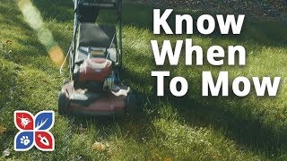 Know When to Mow - Lawn Care Maintenance Tips | DoMyOwn.com