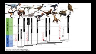 Still Misunderstanding Transitional Fossils Pt. 2