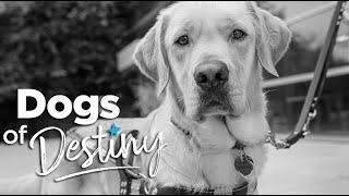 "Dogs of Destiny S1:E2 ""Dear Superhero"" | Southeastern Guide Dogs"