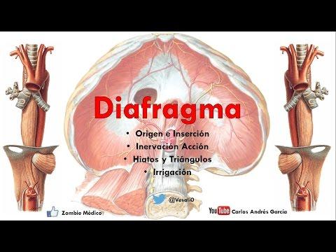 Anatomía - Diafragma (Origen, Inserciones Acción, Irrigación, Hiatos)