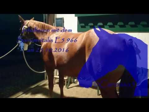 Pferd inhalieren mit dem Sanumvitalis E5 966