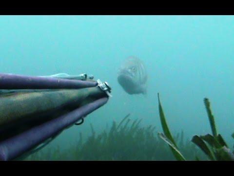 Pesca che si diffonde facendo girare oggetti