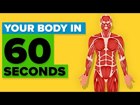 Here's What the Human Body Does in One Minute