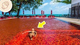 讓人不可置信的游泳池