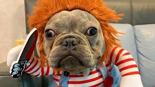 Adorable Dog Dresses As Chucky Doll For Halloween