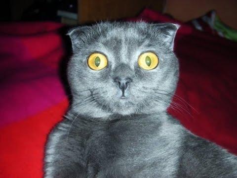 Самые смешные коты в мире #1
