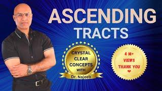 Spinothalamic Tract - Ascending Tracts - Neuroanatomy