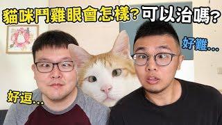 【貓咪鬥雞眼會怎樣?可以治嗎?】志銘與狸貓