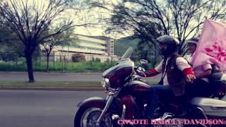 Harley® Rosa