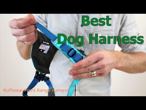 Best Dog Harness in 2019