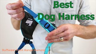 Best Dog Harness (Budget & Comfy)