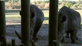 preview picture of video 'Orana Wildlife Park Christchurch'