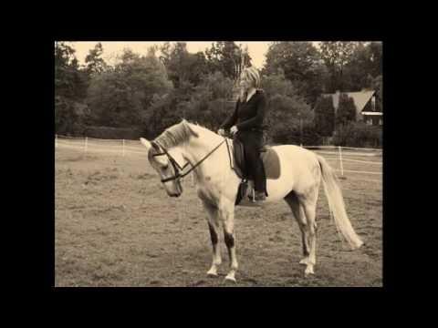 Shafee - Horses
