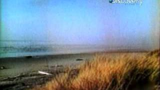 Destroyed in Seconds- Beached Whale Explosion