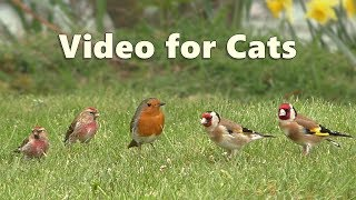 Videos for Cats to Watch with Their People : Birds in The Grass 8 HOURS