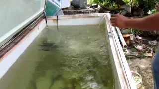How To Make A Bait Tank From A Freezer