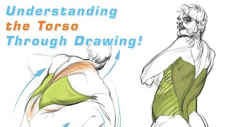 Understanding the Torso Through Drawing: FORCE Friday 51