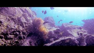 preview picture of video 'Diving with the Dive Centre at The Dive Centre in Sandy Beach resort'