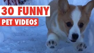 30 Funny Pet Videos Animal Compilation 2016