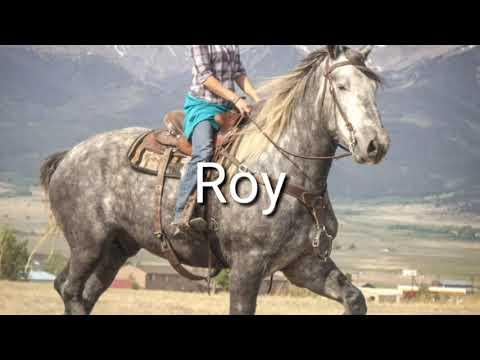 , title : 'Rock and Roy, team of 8&6 yr.old Dapple Grey Percheron Geldings.
