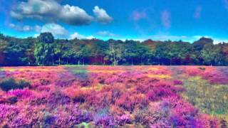 Tekno's 23 - Walk Hard on LSD