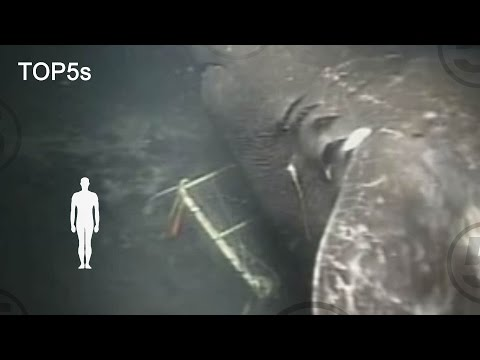 5 Mysterious and Unexplained Sea Creatures