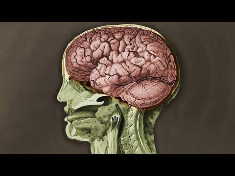 TikToker vypil sklenici muškátového ořechu a tohle se stalo s jeho mozkem