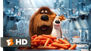 The Secret Life of Pets - Sausage Factory Scene (5/10) | Movieclips - Video Youtube