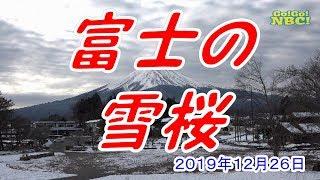 富士の雪桜 Go!Go!NBC