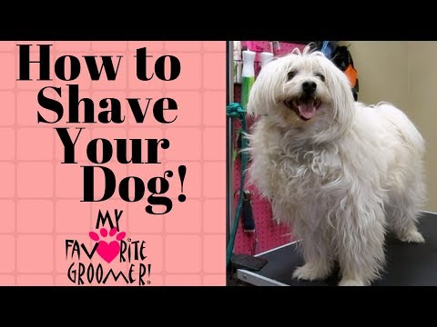How to shave your dog
