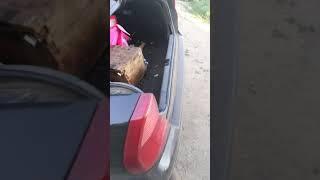 Нетрезвый водитель совершил ДТП и сразу лег спать на заднее сидение