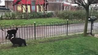 Смотреть онлайн Собачка кидает прохожим мяч, чтобы они с ней поиграли