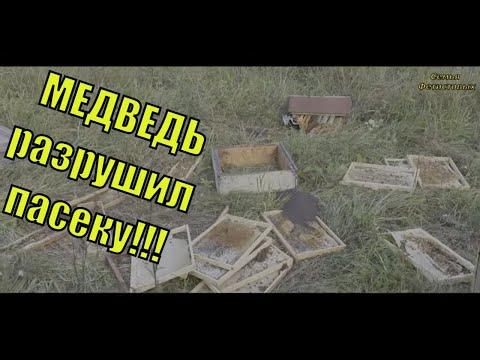 МЕДВЕДЬ разрушил ПАСЕКУ!!! /т Семья Фетистовых