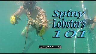 Lobsters! Catching, cleaning, cooking! Amazing!!!!