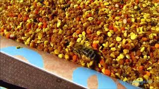 méhike virágport válogat