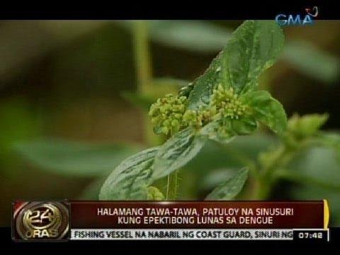 Kung gaano karaming mga araw ng pagbuburo ng isda na nais pumatay parasites