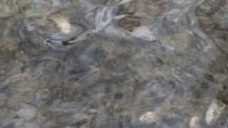 preview picture of video 'polowanie na zimorodka'