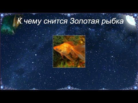 К чему снится Золотая рыбка (Сонник)