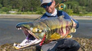 Fly Fishing: BIG Chum Salmon in a Tiny Alaskan Creek