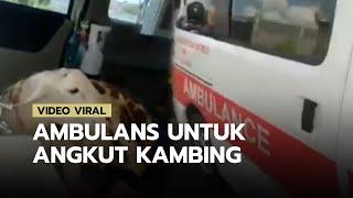 POPULER: Viral Video Mobil Ambulans Angkut 2 Ekor Kambing, Wakil Bupati Lumajang: Itu Memalukan