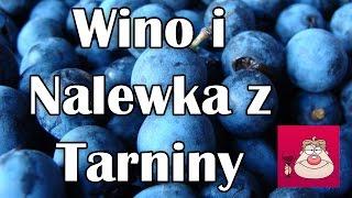 Wino z tarniny + Tarninówka (nalewka z Tarniny)