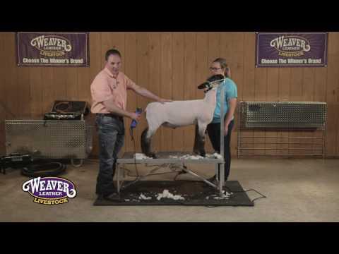 , title : 'Show Sheep Shearing