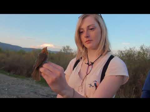 Aras Kuş Halkalama İstasyonunda 7 gönüllü, 2 bin kuş halkaladı