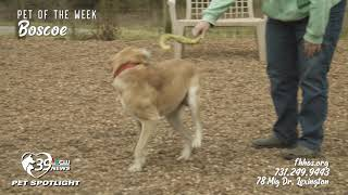 Pet Spotlight: Meet Boscoe