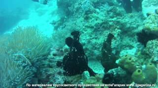 Смотреть онлайн Остров Панглао, подводный мир Филиппин