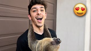 MEET MY NEW SLOTH! (Cutest Animal in the WORLD)