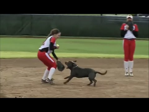 Animals Are Getting Into Sports Whether We Want It or Not