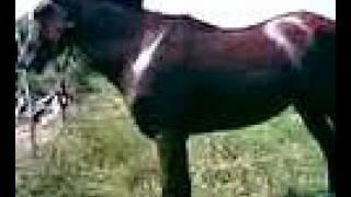preview picture of video 'morgan mi hermoso potrillito'